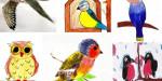 Фестиваль рисунка «Моя любимая птица»